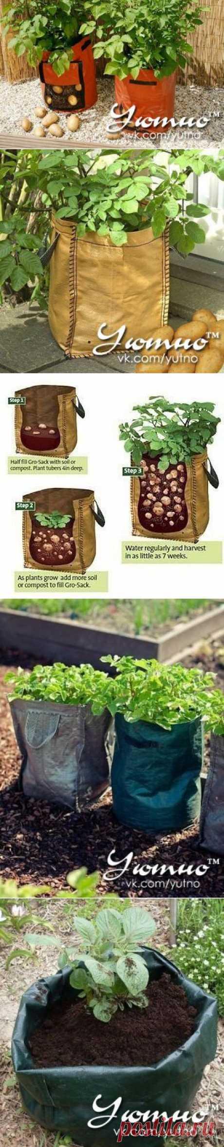 сообщение TATYSIY : Выращиваем картофель в мешке (07:11 14-06-2014) [4031162/327722986] - t.apkhadze@mail.ru - Почта Mail.Ru