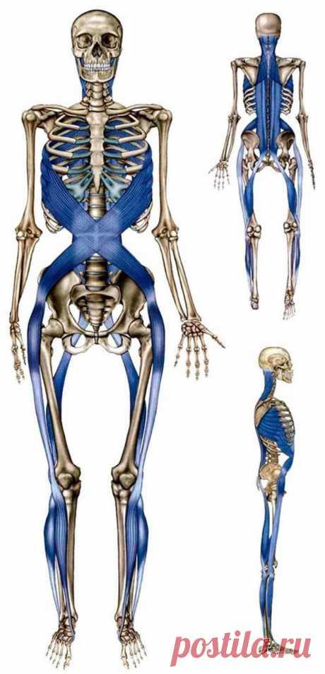 Удивительная фасциальная сеть вашего тела: matveychev_oleg — LiveJournal