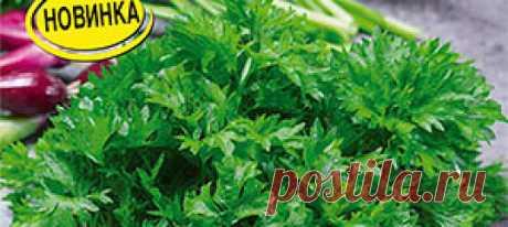 Сельдерей листовой Ажур ®, 0,5 г Кудрявая разновидность листового сельдерея. Сорт раннеспелый, от всходов до первой срезки – 75-80 дней. Розетка компактная, многостебельная, высотой 3...