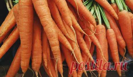 Какие удобрения любит морковь? | Сад, огород, комнатные растения | Яндекс Дзен