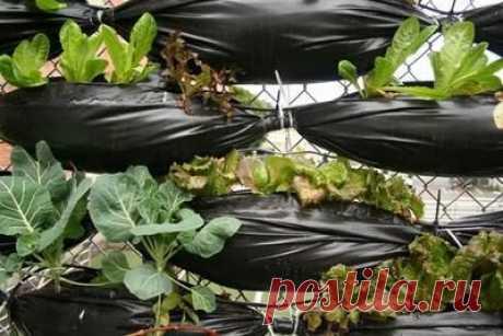 Вертикальное озеленение дачного участка с помощью мусорных пакетов..