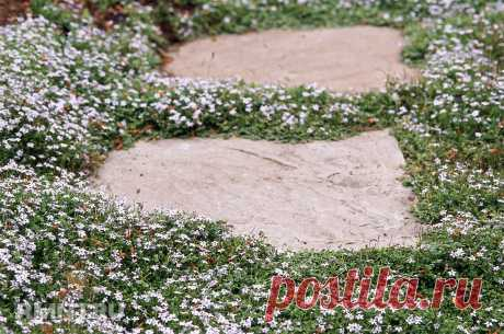Почвопокровные растения в ландшафтном дизайне — Rmnt.ru