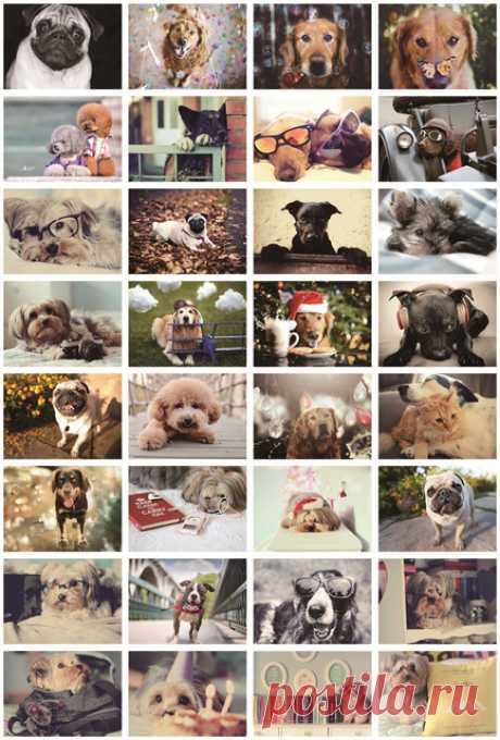 """Набор открыток """"Many lovely small dog"""" (""""Много прекрасных маленьких собак"""").  32 шт. (AliExpress)"""