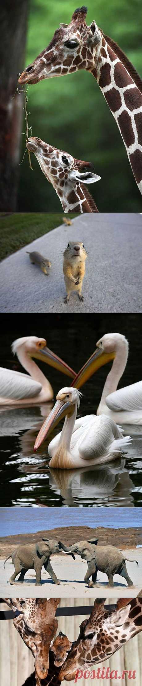 (+1) тема - В мире животных   НАУКА И ЖИЗНЬ