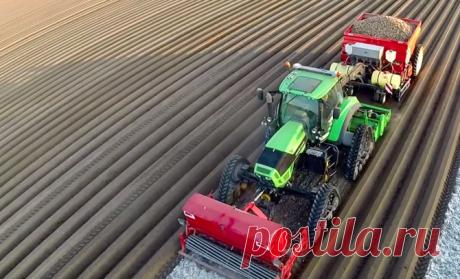 Как происходит посадка и окучивание картофеля в Нидерландах
