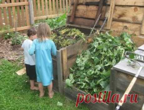 Как можно использовать ботву томатов с выгодой для сада и огорода | Дела огородные (Огород.ru)