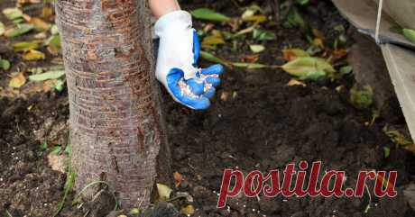 5 способов быстро подкормить деревья и кусты Не хотите несколько раз в год перекапывать приствольные круги и вносить удобрения по списку? Есть и более простые способы для занятых дачников.
