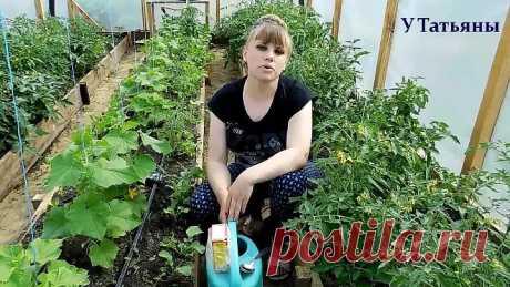 Пищевая сода - подкормка для: огурцов, томатов и других растений