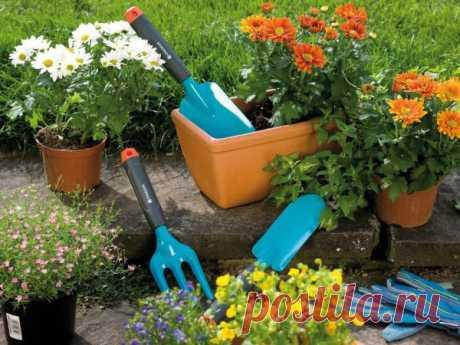 Удобрения для комнатных и садовых растений, которые есть дома у каждого