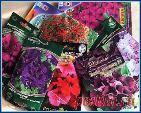 Посев петунии | Дачная жизнь - сад, огород, дача