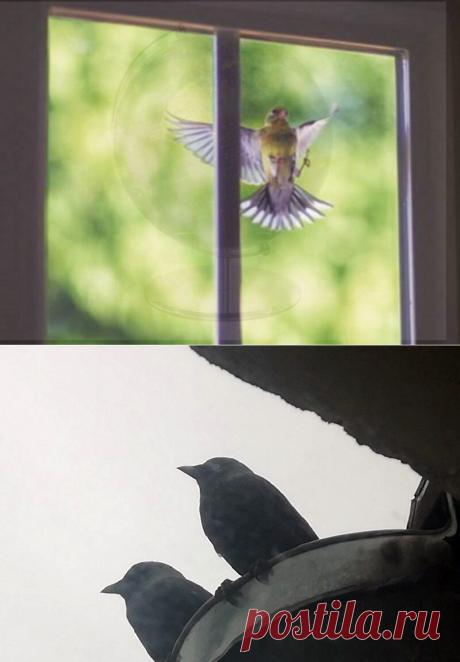Птица ударилась в окно: как трактуется народная примета | Код Благополучия | Яндекс Дзен