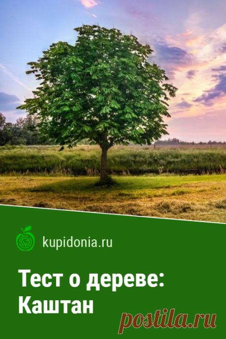 Тест о дереве: Каштан. Интересный тест о каштане из серии тестов о деревьях. Проверьте свои знания!