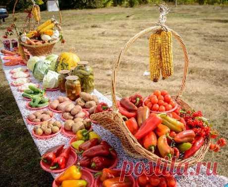 Диетологи назвали овощи, которые полезнее в приготовленном виде - Медицина 2.0