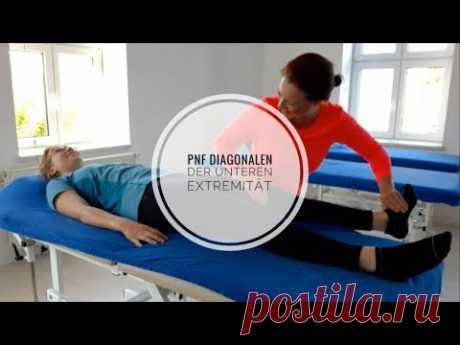PNF - Muster an der unteren Extremität (Lernvideo)