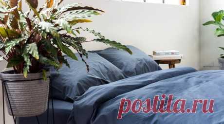 Растения в спальне: стоит ли размещать? | ИНТЕРЬЕРНУТЫЕ | Яндекс Дзен