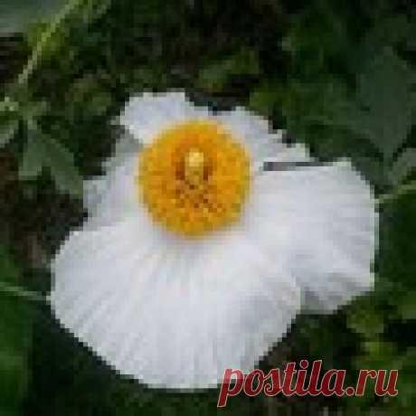 Елена Искрицкая