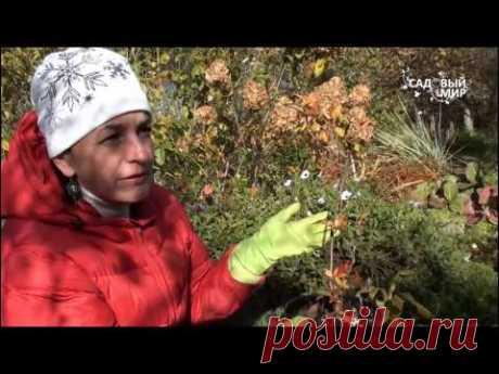 """Как сажать верески и рододендроны. Сайт """"Садовый мир"""""""