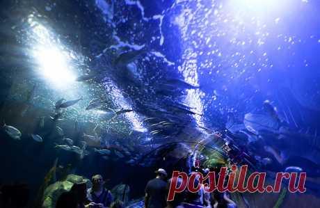 Океанографический парк Валенсии (Испания)