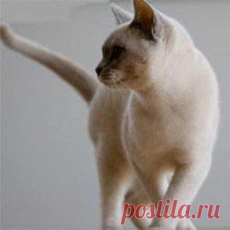 Как избавиться от запаха кошачьей мочи в квартире - актуально