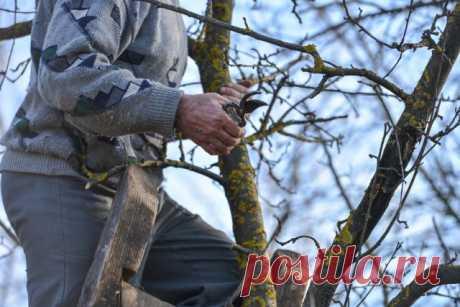 Календарь обработки сада от болезней и вредителей   Уход за садом (Огород.ru)