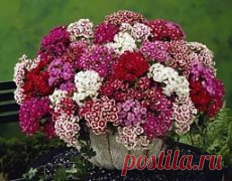 Цветы   Советы по выращиванию и красивые фото на Постиле   Постила