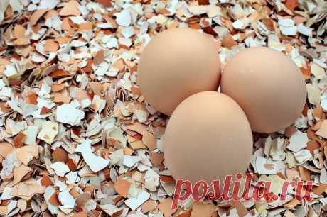 Польза яичной скорлупы в саду и на даче