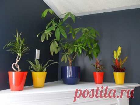 Тенелюбивые комнатные растения Смотрите подборку тенелюбивых комнатных растений с названиями и фото. Расскажем про особенности и как лучше использовать в темных комнатах.