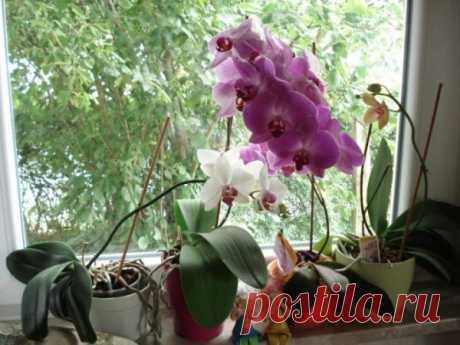 Простой, полезный ингредиент для хорошего роста и цветения комнатных растений