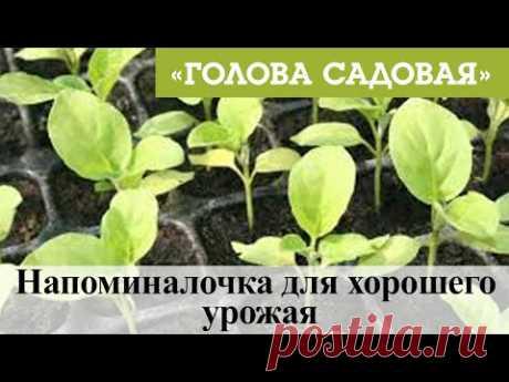 Голова садовая - Напоминалочка для хорошего урожая