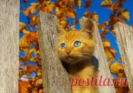 Котик окрас осенний