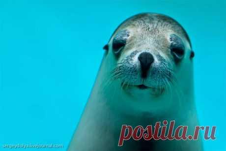 морские котики фото: 18 тыс изображений найдено в Яндекс.Картинках