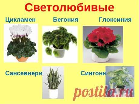 домашние цветы фото и названия уход каталог: 6 тыс изображений найдено в Яндекс.Картинках