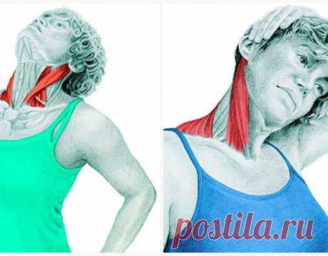 Спиральный твист шеи: упражнения для улучшению кровотока и иннервации Нашашеясодержит центральную костную структуру, представленную семью позвонками шейного отдела и их восемью суставами. Внутри этой костной структуры расположеныконечная часть продолговатого мозга, с…