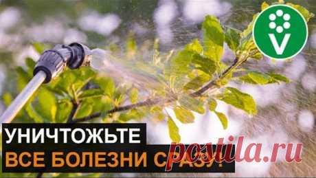 Обработайте ТАК сад ПЕРЕД ЗИМОЙ! Классический рецепт искореняющей обработки
