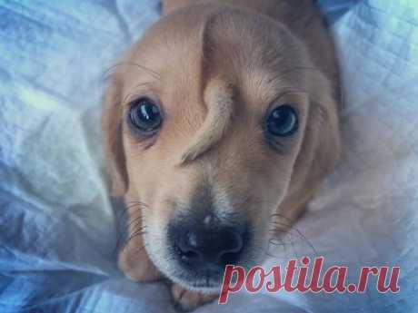 😍 5 очаровательных фото щенка с хвостиком на мордочке Наш мимимитр сломался!