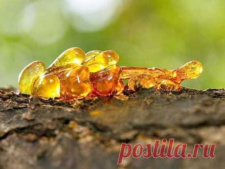 ༺🌸༻ Эфирное масло «Элеми» — 7 полезных свойств и противопоказания