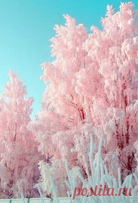 Доброе утро — это не время суток. Доброе утро — это состояние души.  РОЗОВЫЙ ЗИМНИЙ РАССВЕТ... ...НЕЖНЫЙ,ЧУДЕСНЫЙ,ВОЛШЕБНЫЙ,ЖИЗНЕУТВЕРЖДАЮЩИЙ!!! Красота неописуемая.....!❄Всем удачи, прекрасного настроения,яркого, приятного и счастливого дня!!!