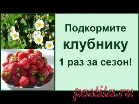 Чем удобрять клубнику во время цветения для лучшего урожая?
