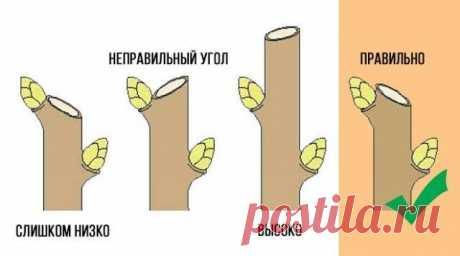 Обрезка плодовых деревьев весной – советы для начинающих и не только | Уход за садом (Огород.ru)
