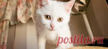 Как выбрать котёнка? | PetTips