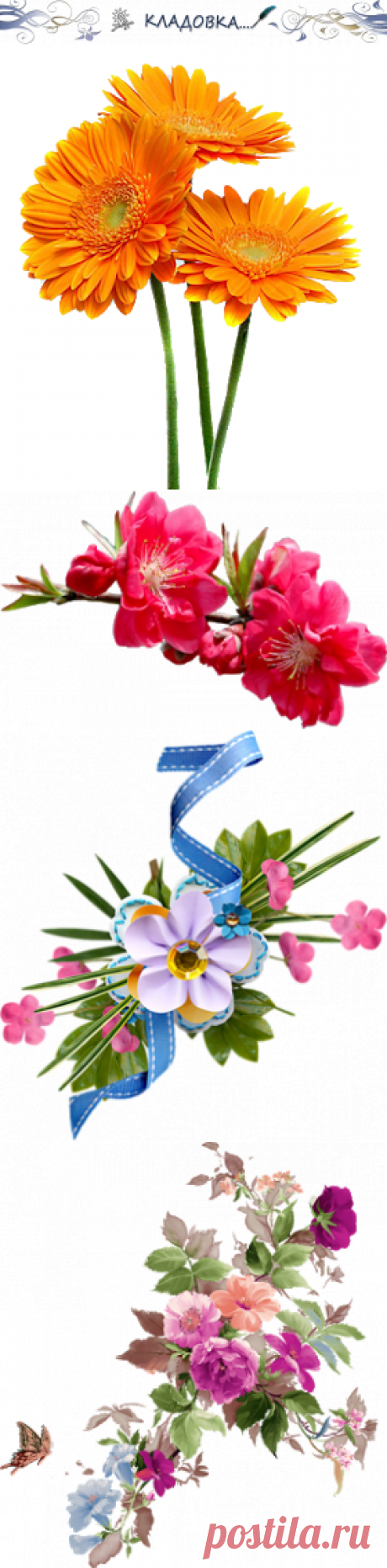 Кладовка...: Цветы с ножками(веточками) - png - на прозрачном фоне