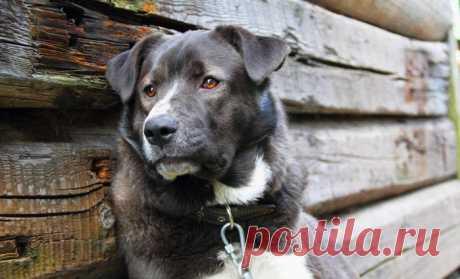 «Серый» – трогательный рассказ о самом преданном друге Все собаки попадают в рай.