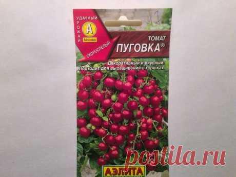 Выращивание томатов на подоконнике. Мой уникальный способ посева   Дачные секреты от Виктории Радзевской   Яндекс Дзен