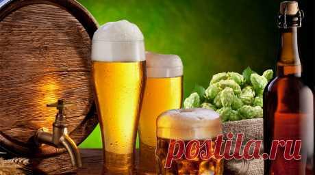 Por qué es necesario beber cerveza: los científicos han reconocido su bebida más útil en el mundo