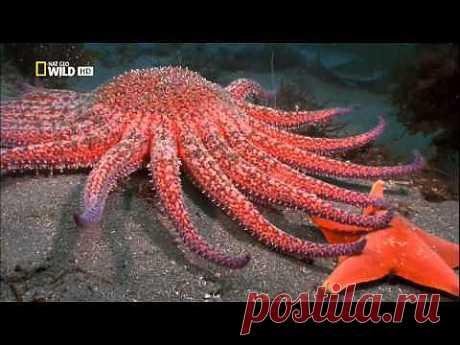 Самые опасные животные. Морской мир.HDTVRip(720p). - YouTube