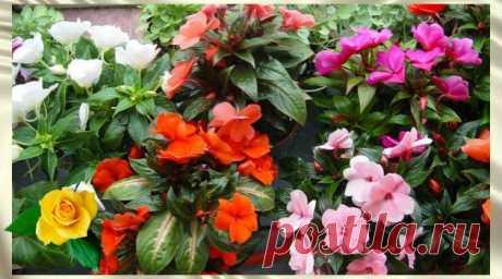 """10 советов по уходу за домашними растениями. Чем """"подкормить"""" любимые цветы? - Жизнь планеты"""