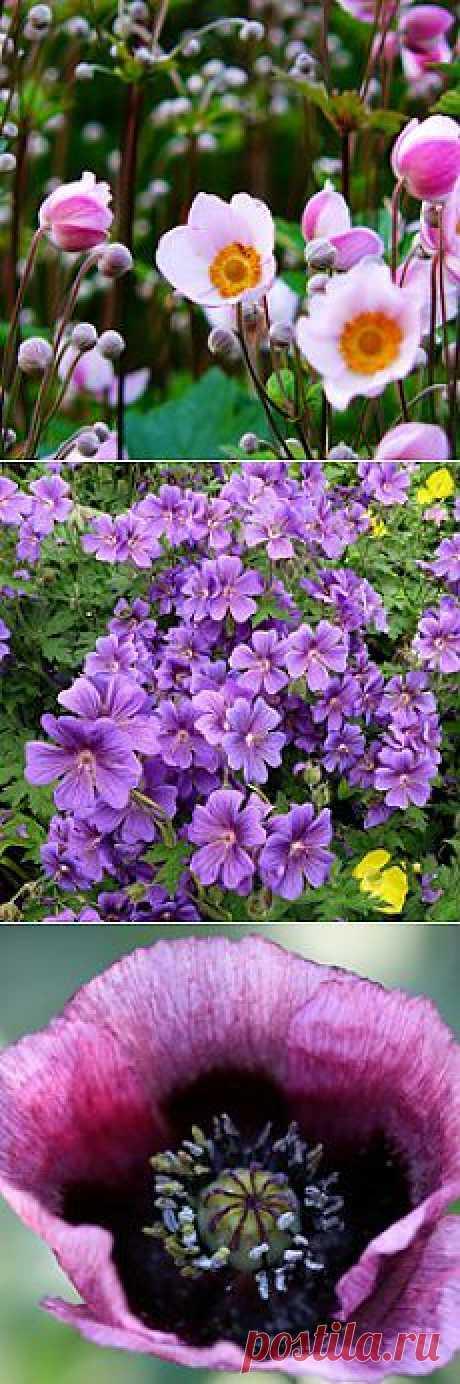 Красивые неприхотливые многолетники. Начинающим цветоводам подчас сложно бывает ориентироваться среди огромного ассортимента многолетних цветов. Как выбрать самые лучшие из многолетников?