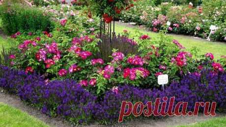 Садовые цветы: апреля 2019