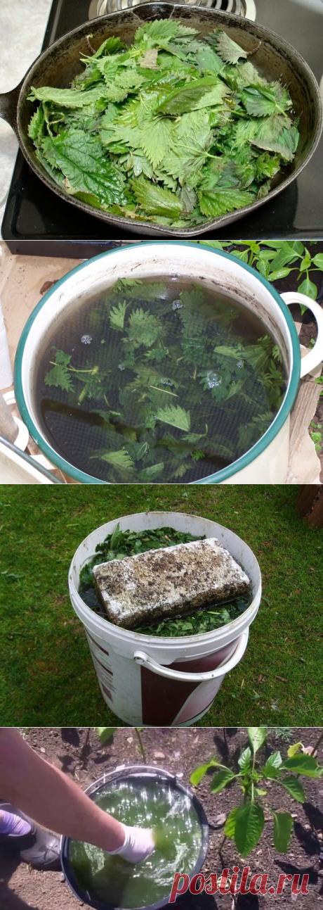Настойка из крапивы – отличная заменая ядам и пестицидам | Дачный каприз | Яндекс Дзен