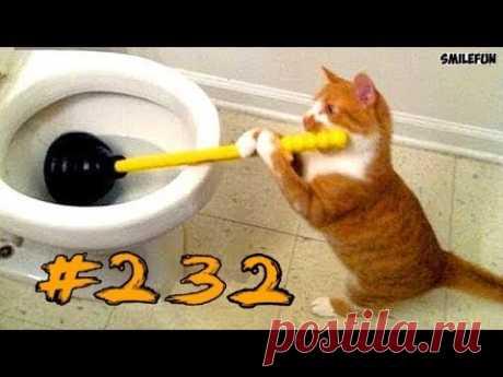 КОШКИ 2019 Смешные коты приколы с котами до слез – Смешные кошки 2019 – Funny Cats - YouTube